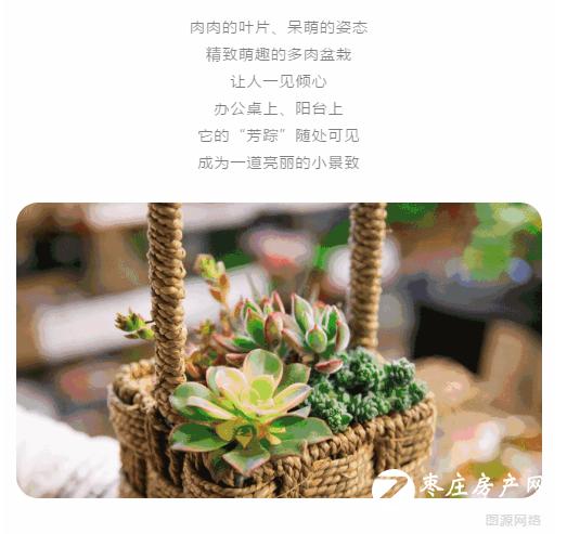 恒大御府丨多肉DIY 绿意时光 萌动春日